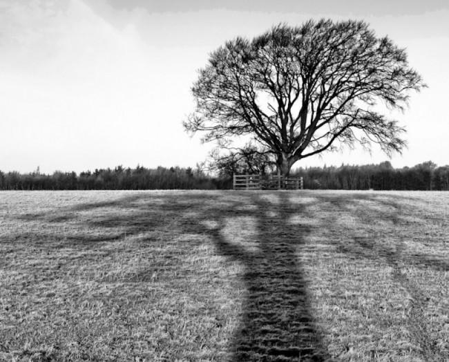 Reflecting on the tree, Sedgefield - UK, 2009